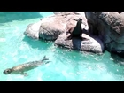 Feeding the sea lions at Six Flags valejo ca