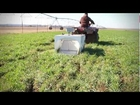 Using the Rising Plate Meter and Forage Sled to Determine Forage Mass