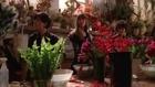Fading Gigolo - trailer [HD] (2013) Liev Schreiber, Sofía Vergara, Sharon Stone, Woody Allen, John Turturro, Vanessa Paradis, Max Casella