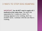 How to Stop Your Dog from Humping